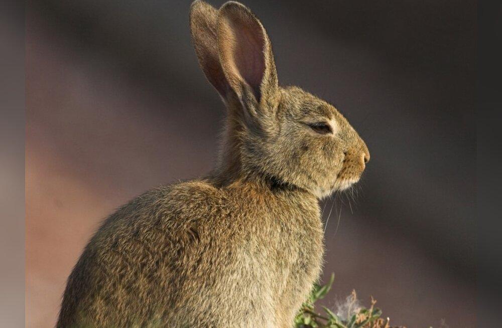 Looma-aasta märk — mida see sinu kohta ütleb