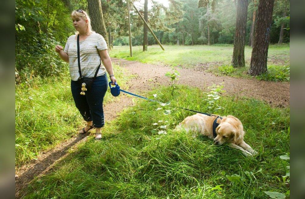 Sarimürgitaja Stroomi metsas: surnud on kaks koera
