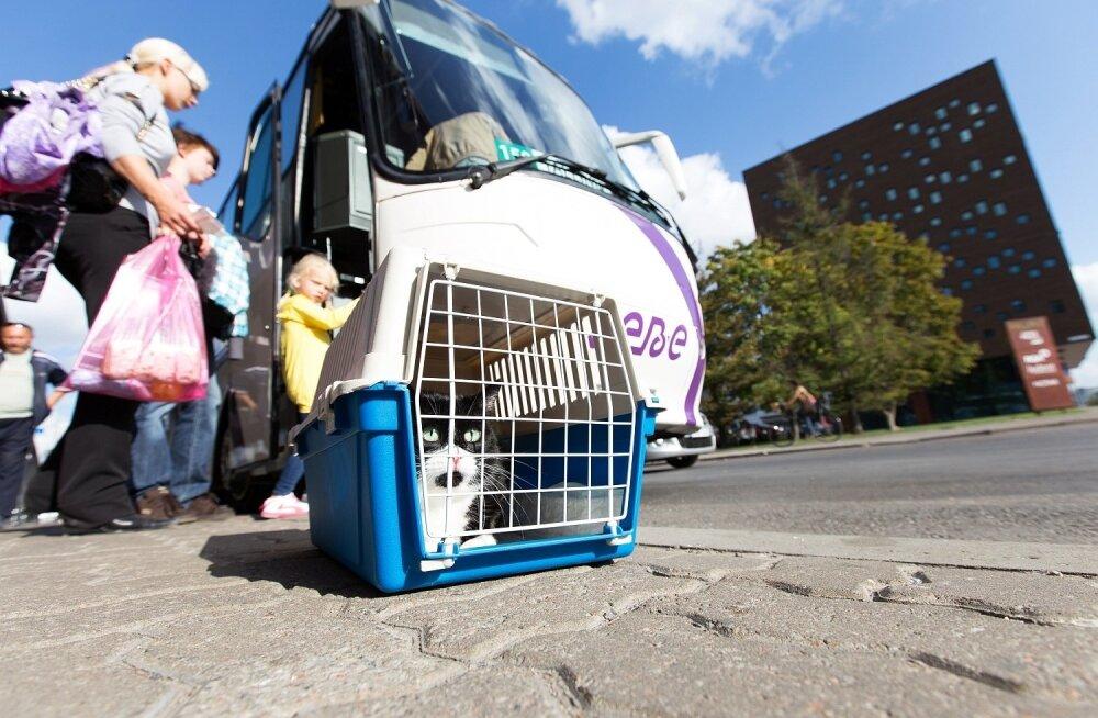 Lemmiklooma veo eest küsib mõni bussifirma eraldi raha, isegi kui loom mahub sülle.
