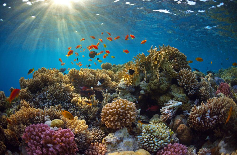 Kuula, loodus räägib sinuga: korallrahu