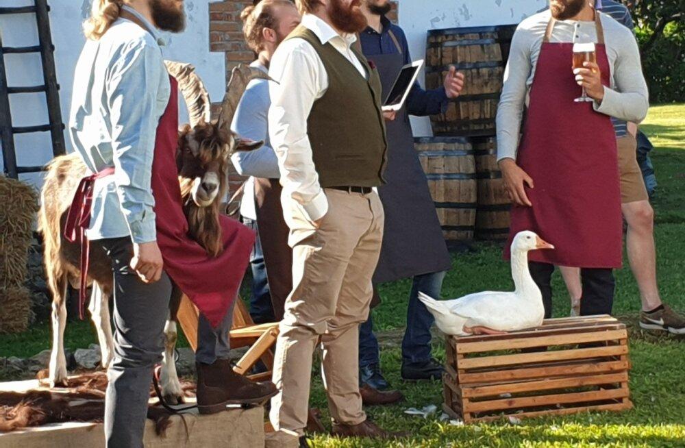 Hani Saima osales Tšehhi õlut Žatecký Gus reklaamivas filmis koos rahvusvahelise seltskonnaga – vingete sarvedega sokk Jõgevamaalt, õlut reklaamiv peaosaline Ungarist, lisaks hulk vene-inglise segakeelt purssivat rahvast nii pildile jäämas kui ka kaadri taga toimetamas.