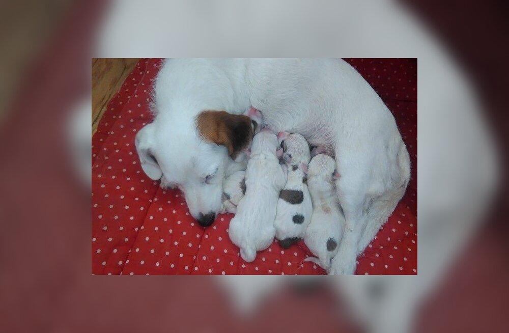 Pätu lugu: korduvalt oma heaolu ohverdanud õnnetu koeraema saab viimaks vääriliselt emadepäeva nautida