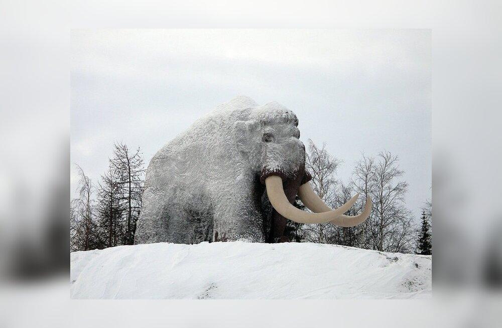 Mammutid surid tühja kõhu tõttu