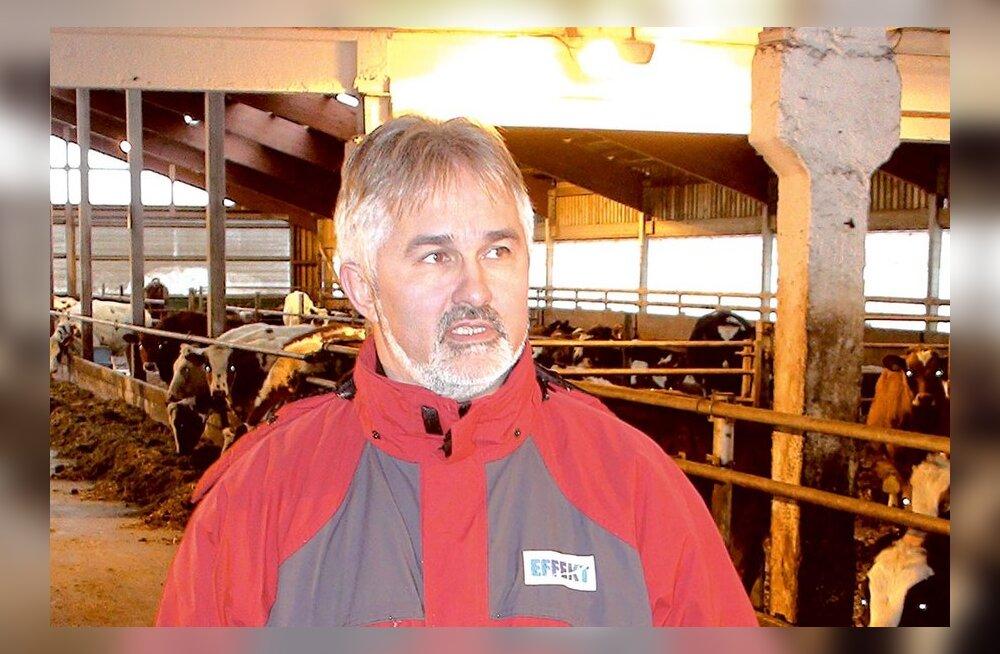 Parimad loomakasvatajad saavad ühe vasika juurde