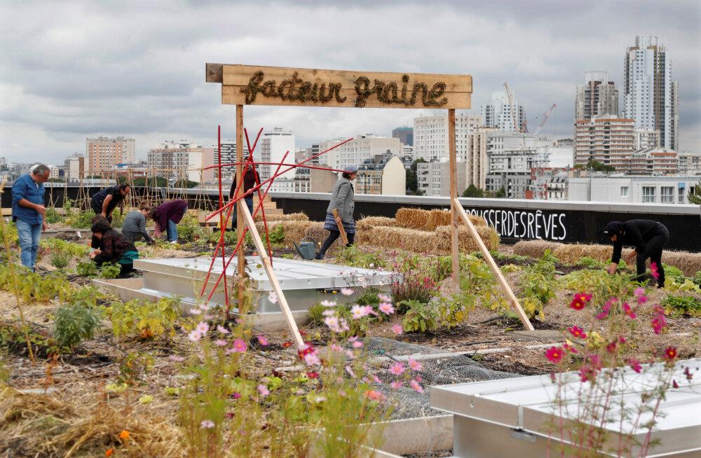 В Париже откроют самый большой в мире огород на крыше