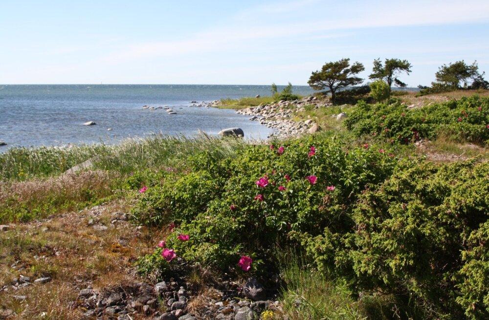 Aegna maaliline saar
