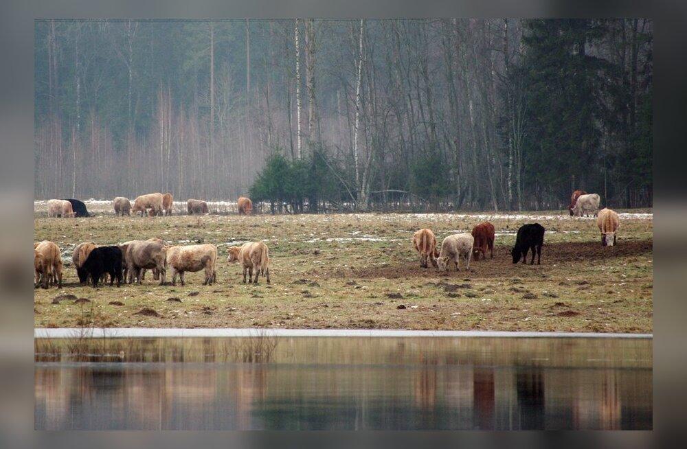 FOTOD: Üleujutus Pärnumaal ei parane