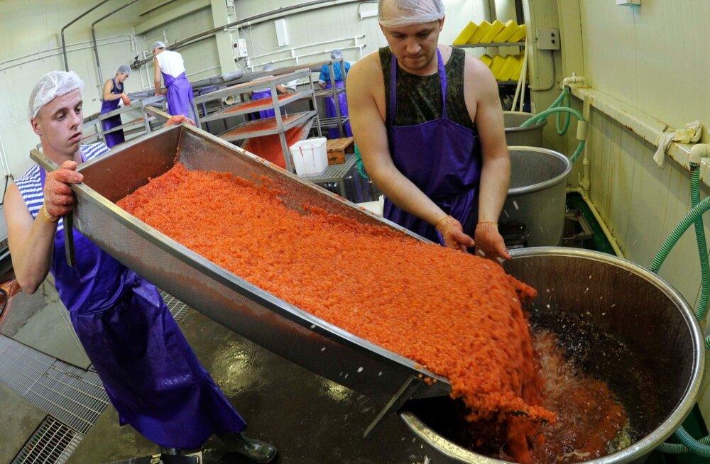 Kalamarja tootmine Kamtšatkal.