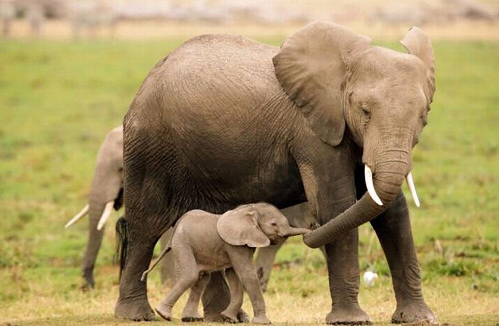 Imeline GALERII | Hingematvad pildid, mis toovad esile loomade vastastikkuse kiindumuse siira jõu ja jäägitu armastuse ilu!