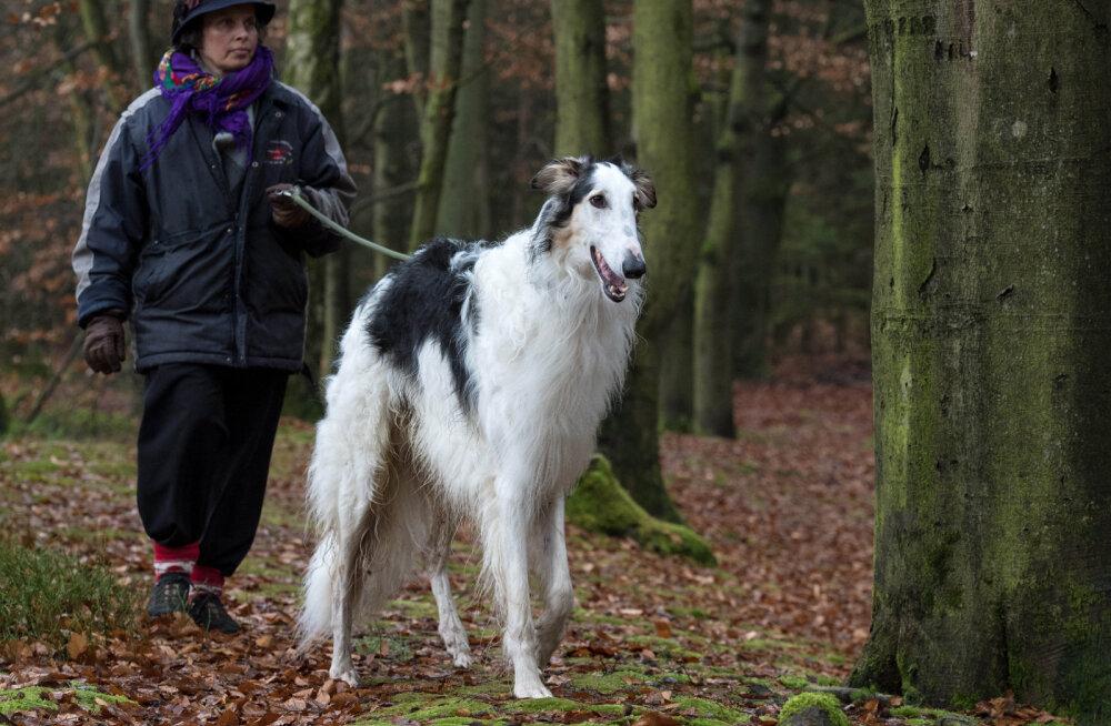 Haruldased koerad, keda Eesti tänavatel kohata on tõeline vedamine