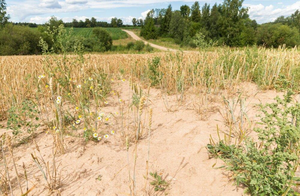 Põllumeestele, aednikele ning päästeametile kestis raske aeg kevadest sügiseni välja.