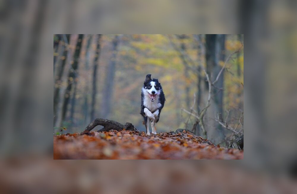 Kuidas lemmiklooma liigesehäda ära tunda ja mida teha, et aidata