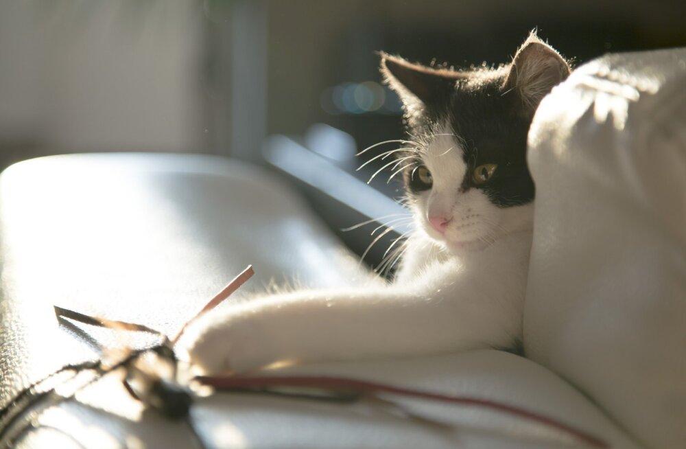 Valga varjupaik lausa kubiseb kassipoegadest, üks uhkem kui teine, igaüks oma nägu ja tegu