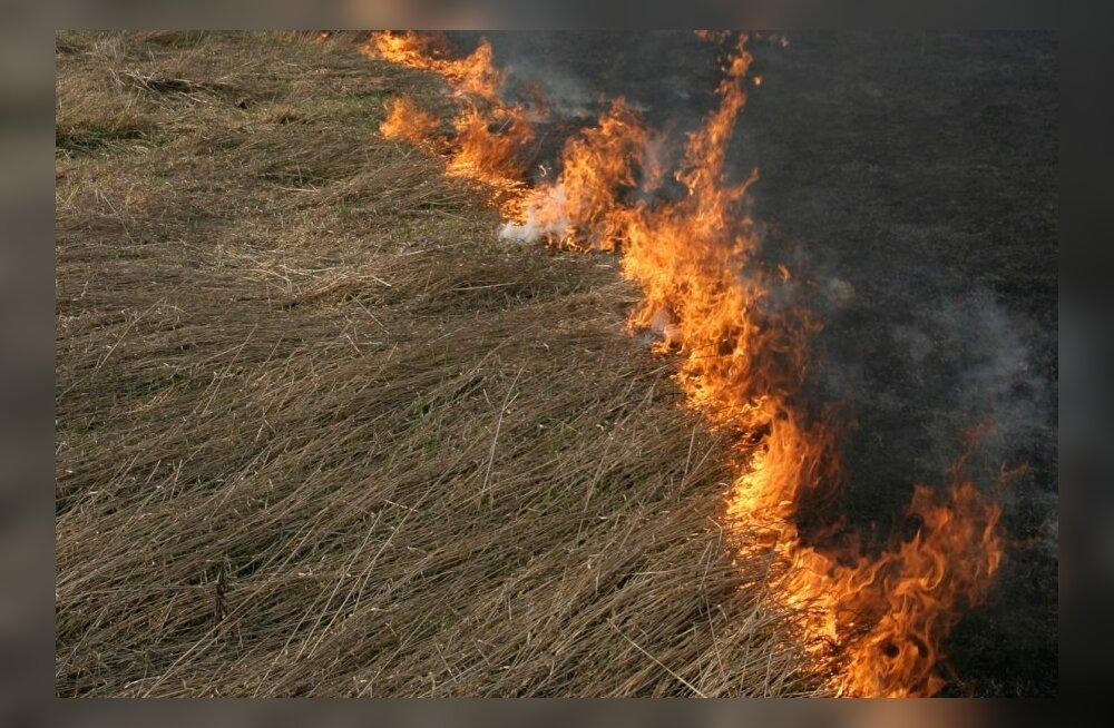 TASUB TEADA: Kulu põletamine on keelatud ja erakordselt ohtlik