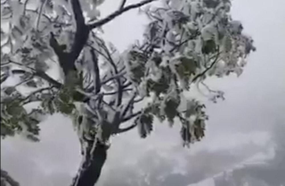 ВИДЕО. Редкое явление: на Гавайских островах выпал снег