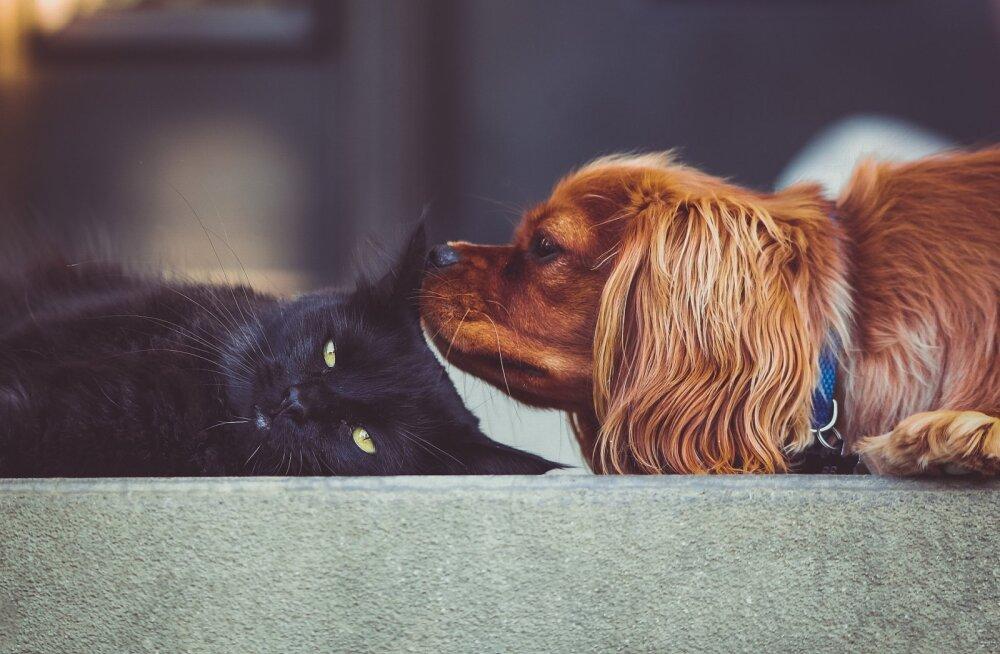 TEST | Kas suudame vaid 8 lühikese küsimusega kindlaks teha, kas oled pigem kassi-või koerainimene?