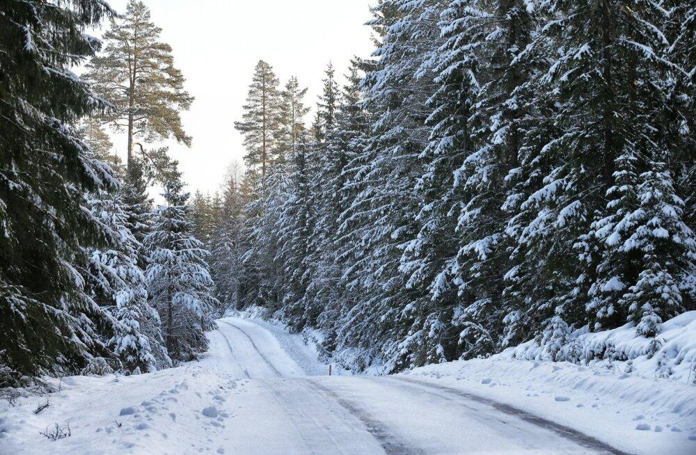 Sellised on Rootsi ralli radade olud praegu. Üpris tuttavlik pilt, mis võiks Tänakule sobida.