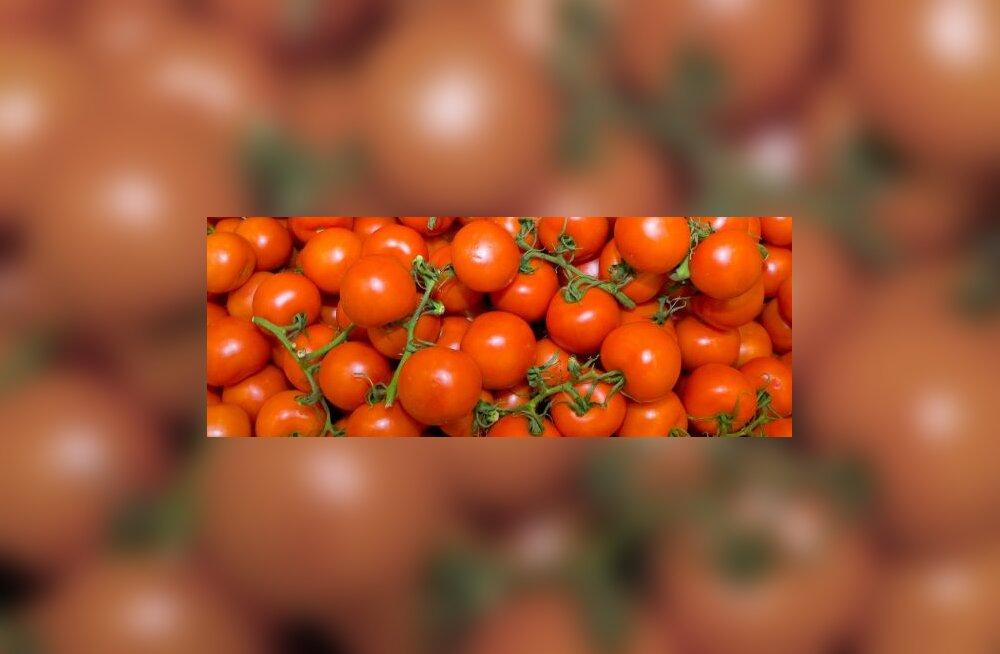 Parimad tomatid tagab väetis, mis tehtud inimkusest