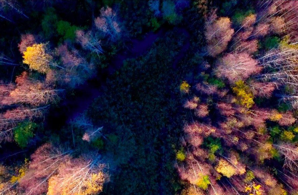 Imekaunis droonivideo: Eesti sügise värviküllus