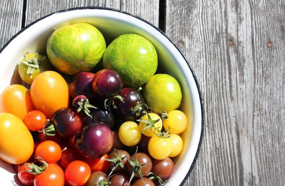 Kasvatusnõksud | Kuidas kasvatada mahlast ja magusat tomatit oma kodus?