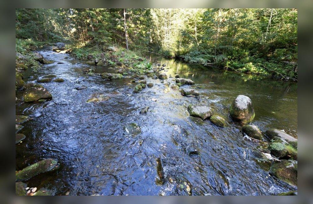 Saesaare pais ja Ahja jõgi