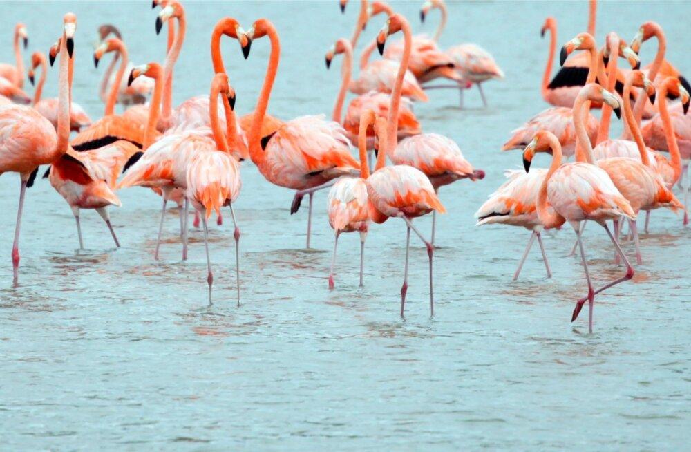 Kolmeosaline Inglise sari vaatleb mitmepalgelist Mehhiko loodust.