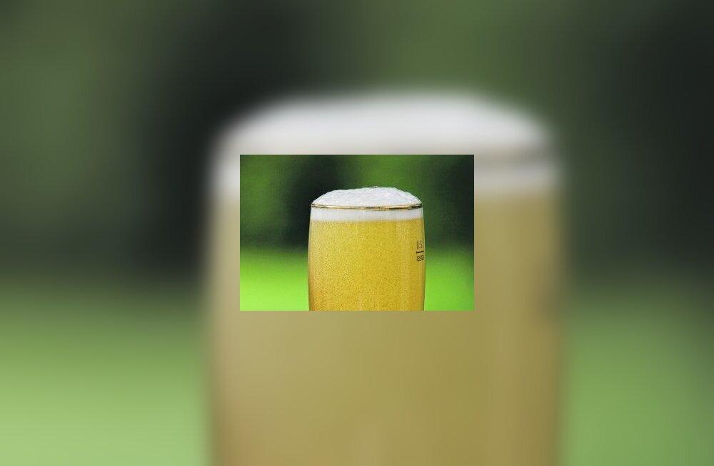 """""""Vähese gluteenisisaldusega"""" õlu võib sisaldada palju gluteeni"""