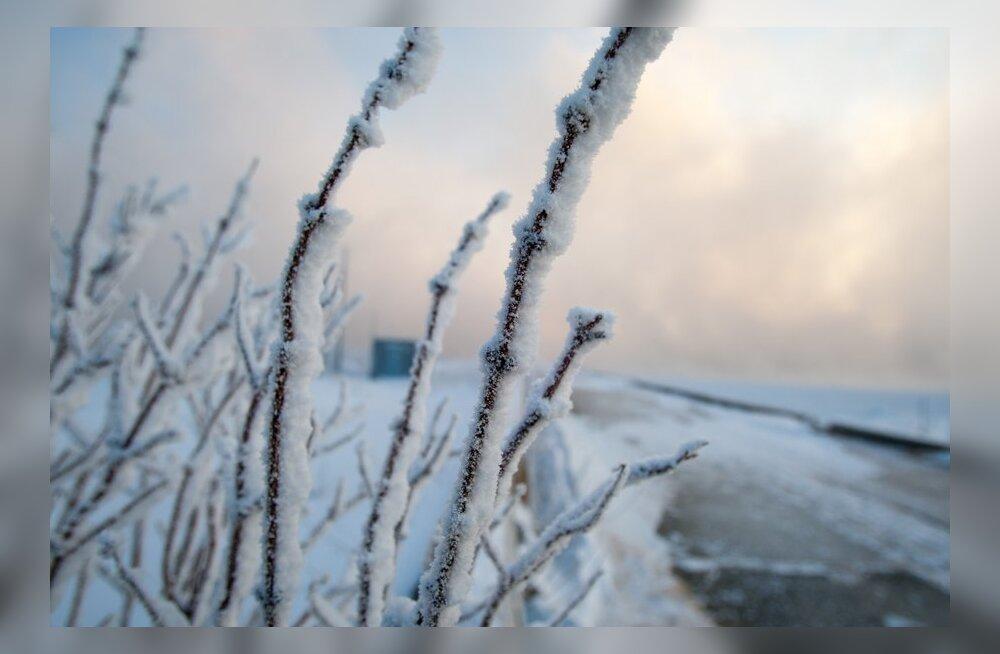 Neste alustas kõrge külmataluvusega diislikütuse vedu jaamadesse