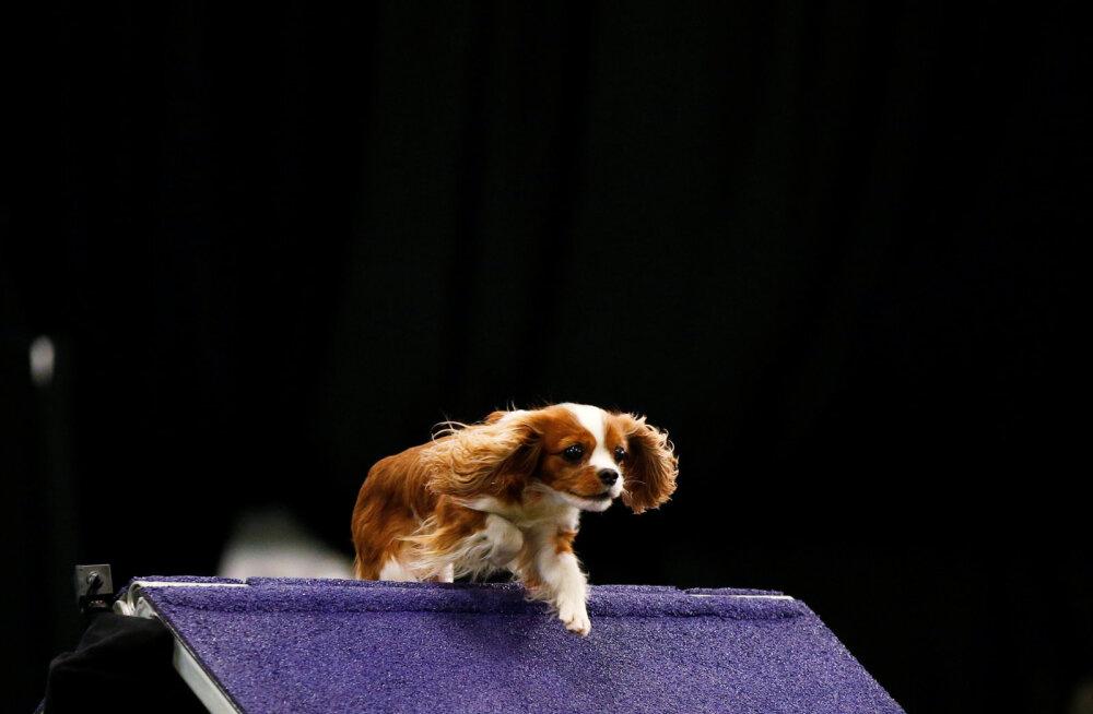 Esmalt koerad, siis inimesed: salapärane Harvardi idufirma tahab vananemist tagasi pöörata