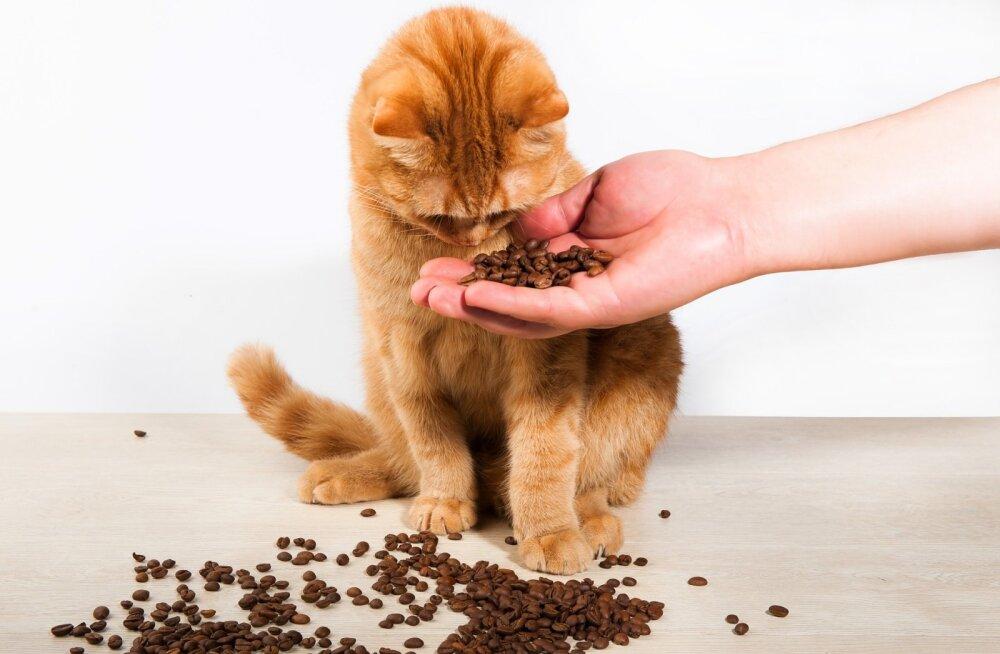 8 lõhna, millele kassid ei suuda kohe kuidagi vastu panna