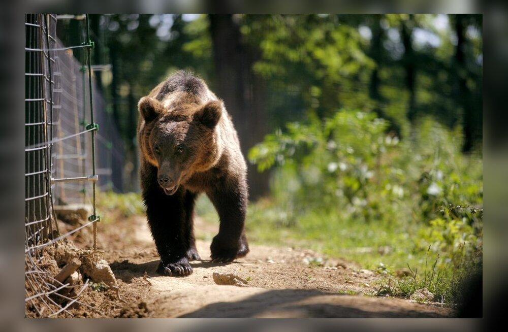 Pirital karu kohanud Andres Tropp: adrenaliin tõusis üles!