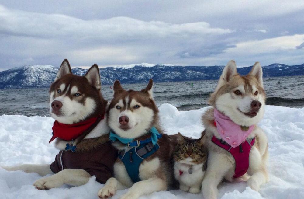 """Parimad sõbrad igavesti: koer """"lapsendas"""" hinge vaakuva kassipoja, kes tänaseks koertekarja lahutamatu liige"""
