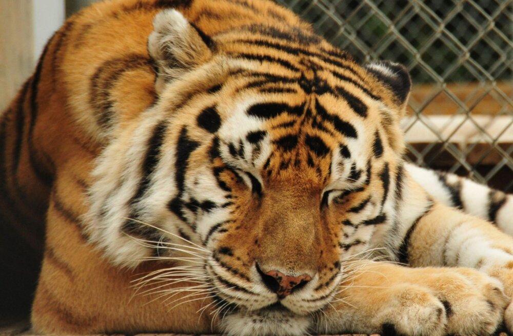 Leid kuulutustesaidilt: 318 000 euro eest saad loomaaia koos sajakonna elukaga
