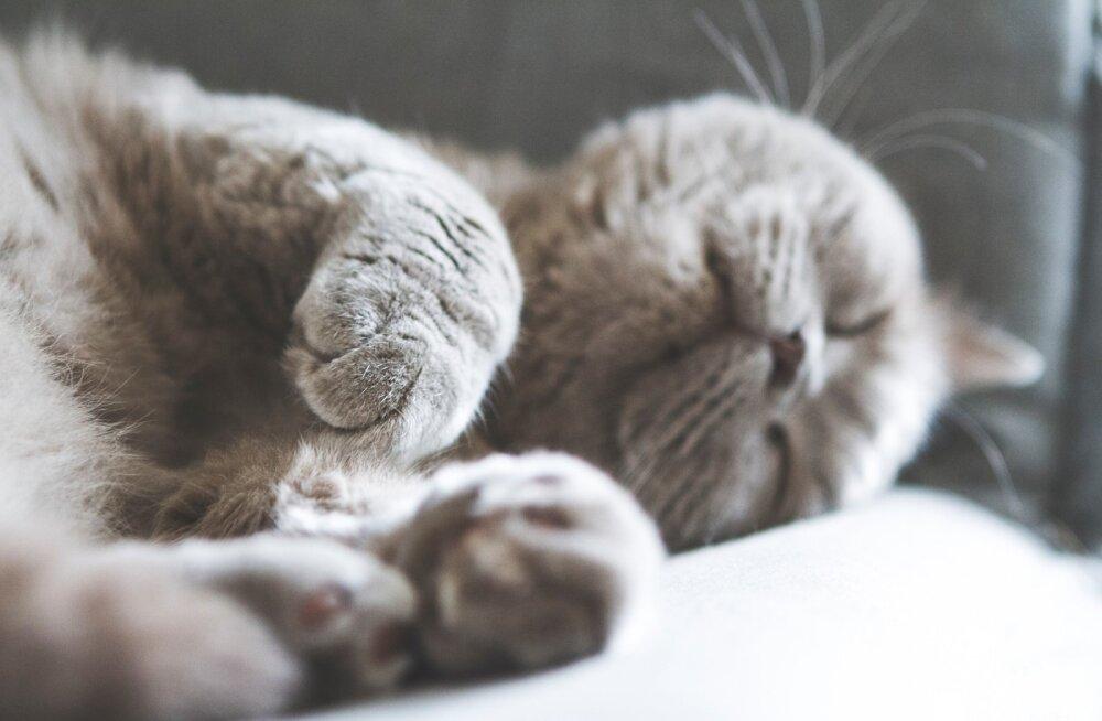 ВИДЕО | Как нейтрализовать мешающего работе кота: метод 100%!