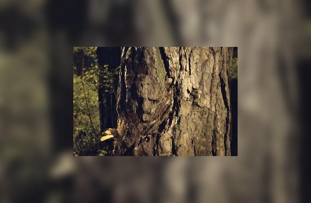 ФОТО | Житель Ласнамяэ рассмотрел в перелеске у реки Пирита лешего. А кого увидели вы?