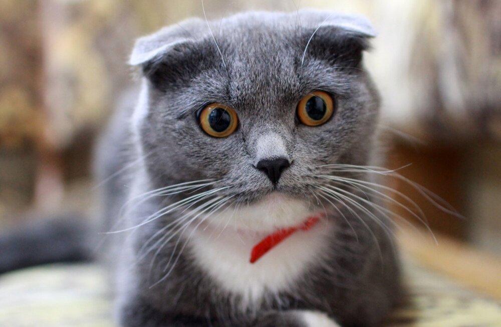 Lugeja absurdne juhtum: magasime rahulikult, kuni öösel hüppas aknast sisse võõras kass ja kodus läks tohutuks madinaks!
