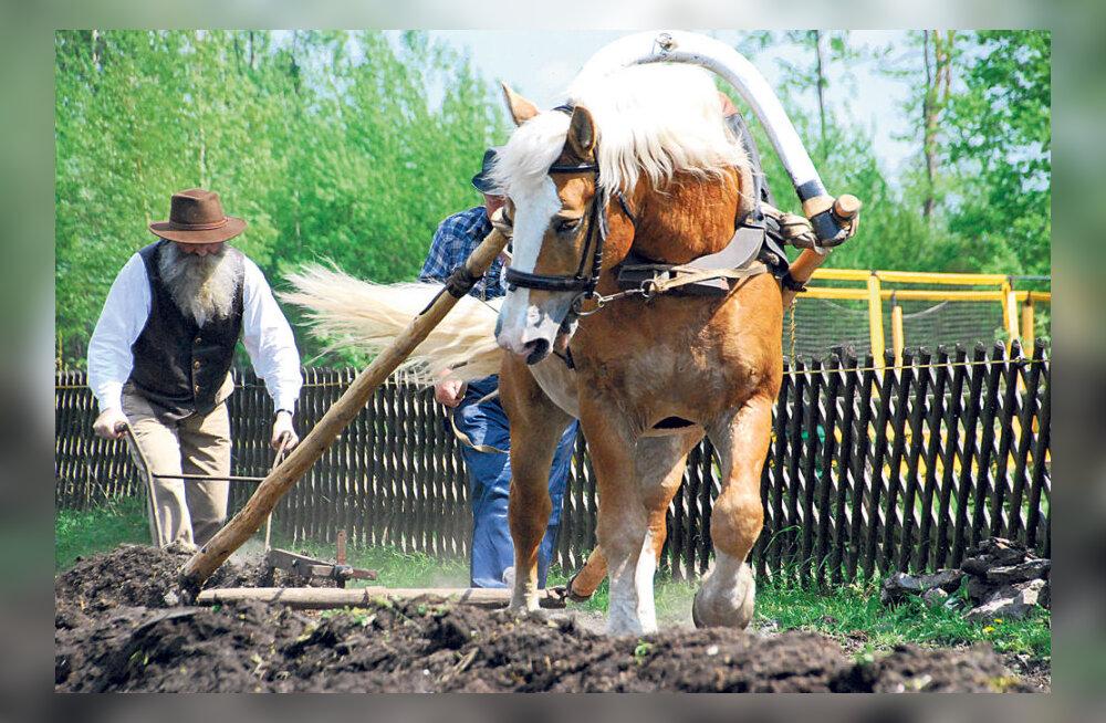 Pärnumaal künti hobustega