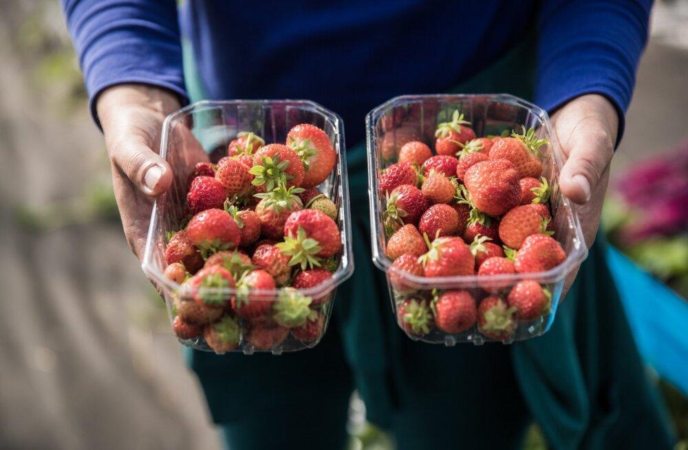 Aran Farming maasikad