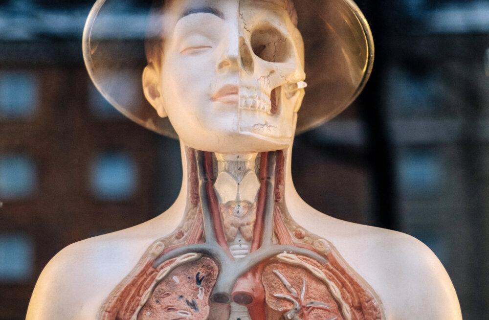 Mis on meditsiin? Mis on alternatiivmeditsiin? Mis on allopaatiline meditsiin? Mis on holistiline meditsiin?