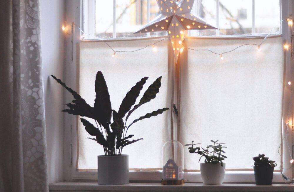 11 rahakotisõbralikku viisi, kuidas kodu sel talvel skandinaavialikult hubaseks kujundada