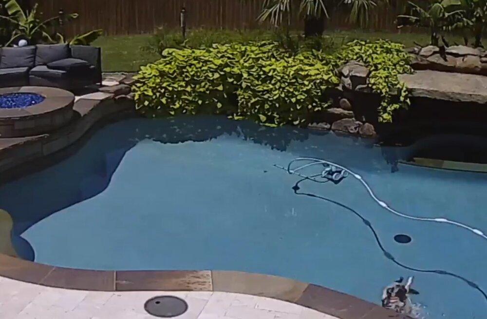 Naljakas VIDEO   Pontsaka mopsi päev basseini ääres läks planeeritust pisut teisiti