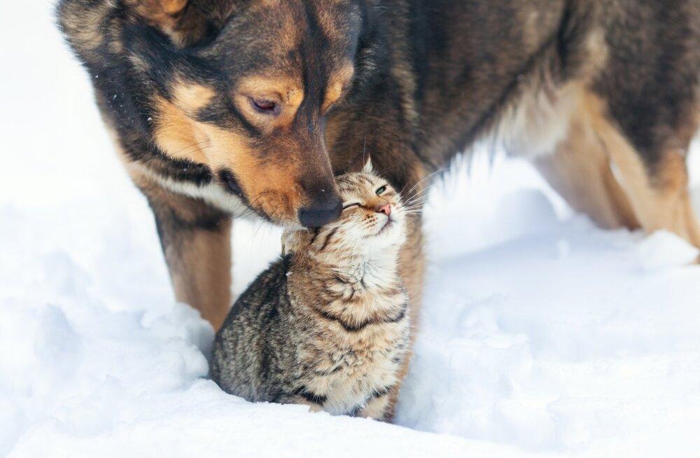 Jälgige, et külmaga harjumata lemmikloomad ei külmetaks.