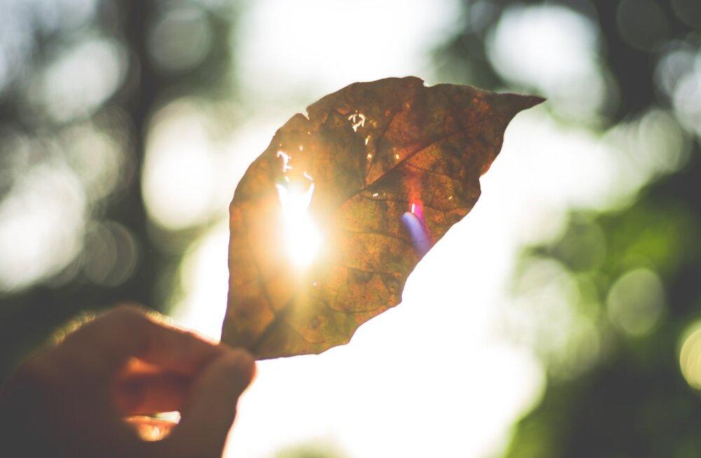 6 самых ярких цветовых сочетаний осени: ты должна увидеть это первой!