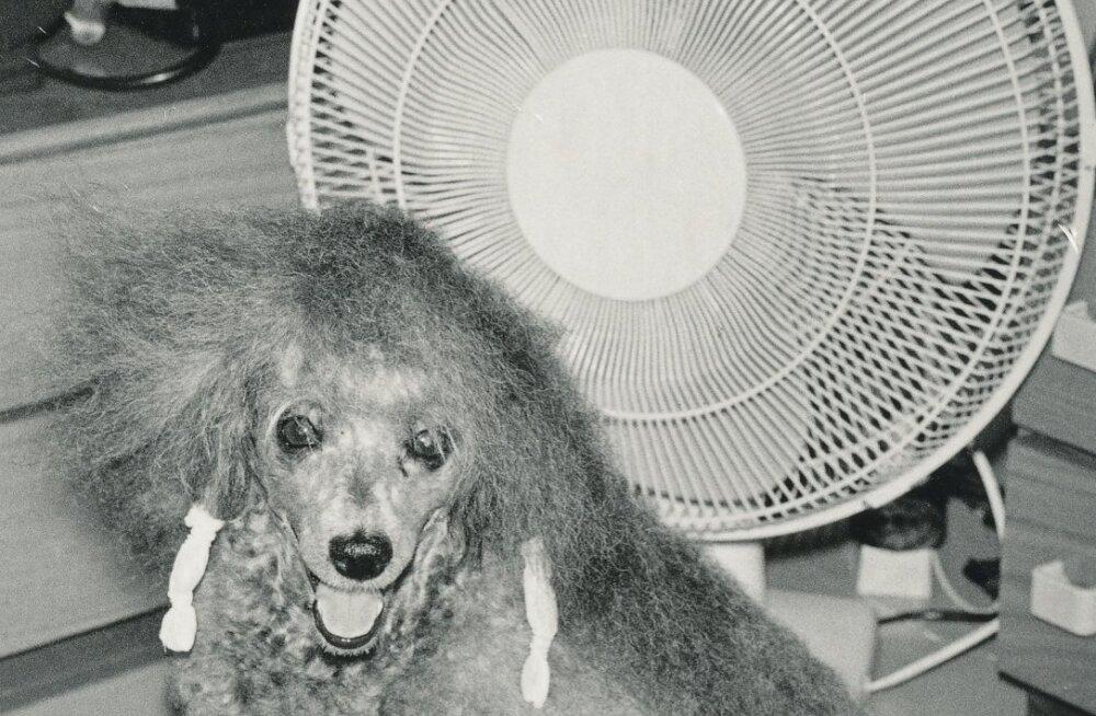 Loom vajab õhku nagu meiegi, eriti palavaga