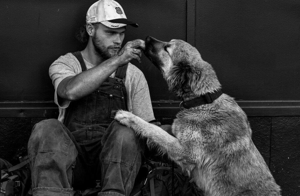 Väga liigutav lugu: Miks on kodututel koerad? Loomaarst, kes ravib tasuta kodutute inimeste loomi