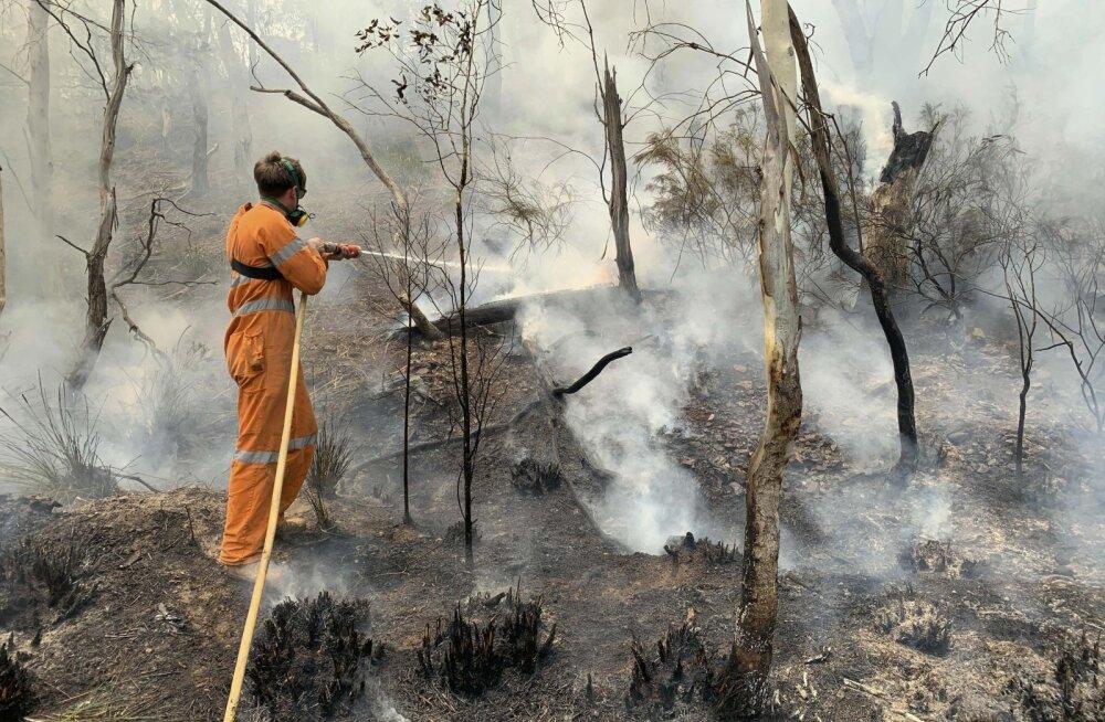 """Преподаватель из Брисбена обвинил """"зеленых"""" в """"рекордности"""" австралийских пожаров. Они ссылались на """"права зверей"""""""