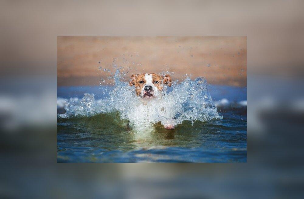 Kuidas koer veega sõbraks teha?