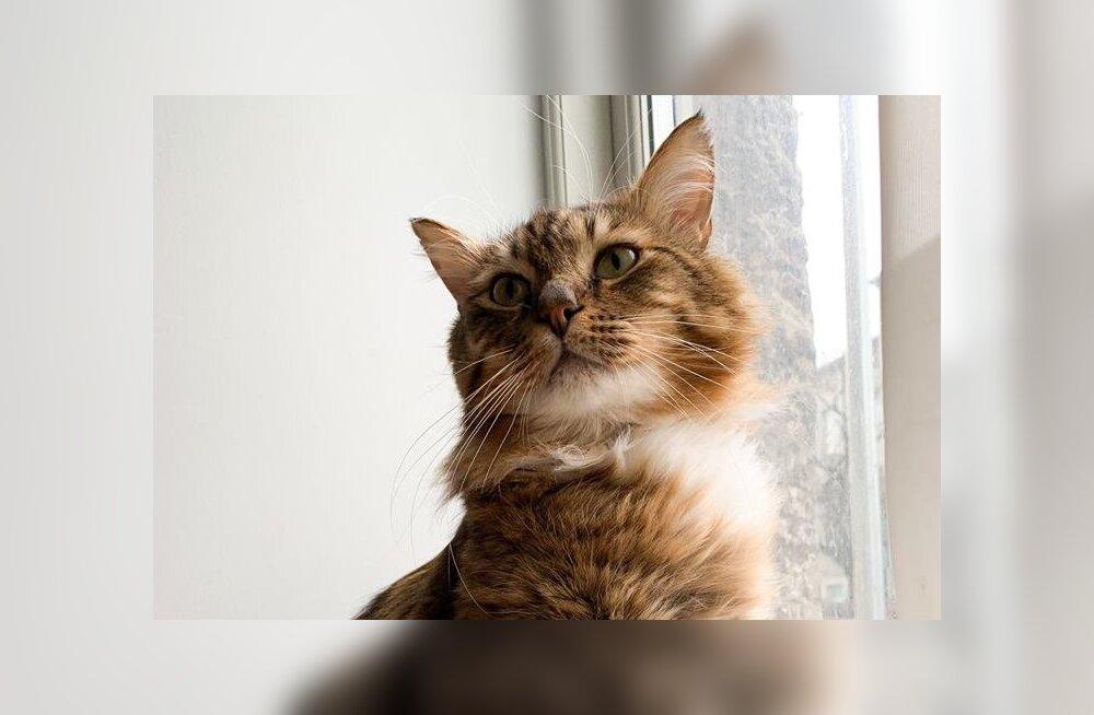 Halvaa lugu | murelik kass, kes soovib sind tänada juba ainuüksi loo lugemise eest