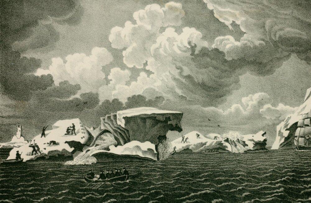 Vene ümbermaailmareisidel mängisid olulist rolli baltisaksa päritolu meresõitjad