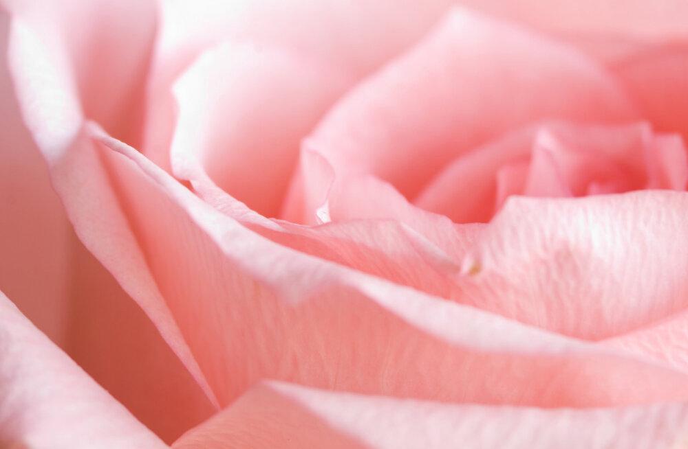 Yoni saladused: teekond teadliku ja püha seksuaalsuse poole